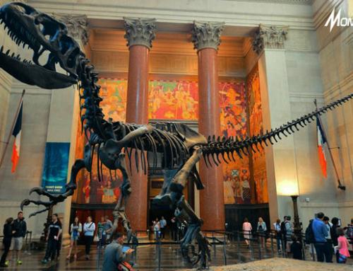 Jangan Lewatkan! Pendanaan Senilai 750K USD Bagi 5 Museum Terbaik Dunia